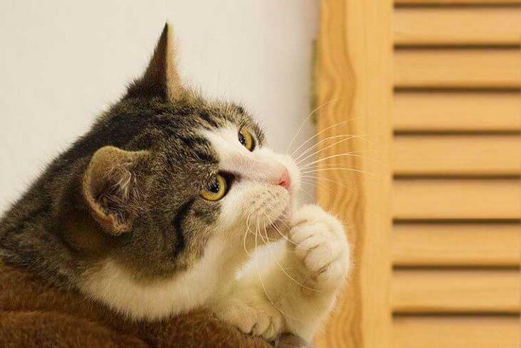 Статья о выборе модели оплаты SEO может вас погрузить в раздумья. Поэтому мы разбавили её смешными котиками.