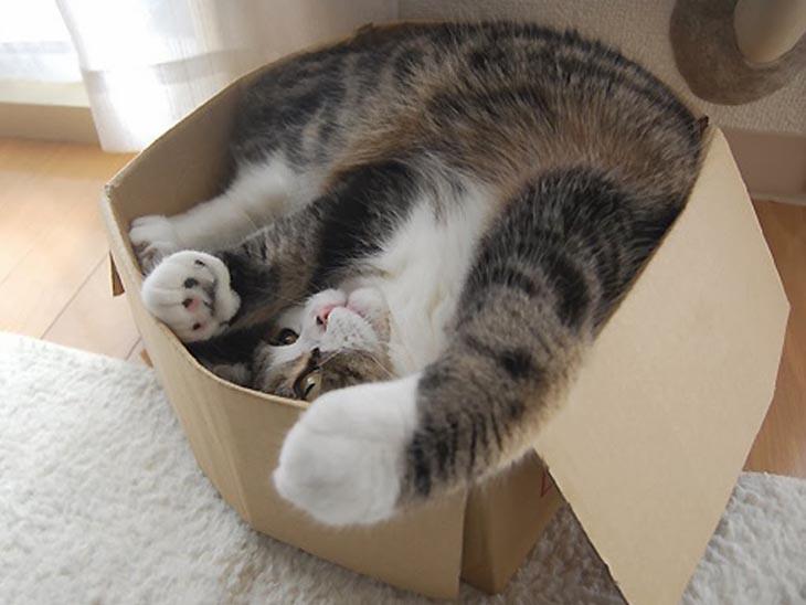 Главное в попроектной работе —это «доставить посылку» такой, какая она должна быть (и из рамок не вылезти).