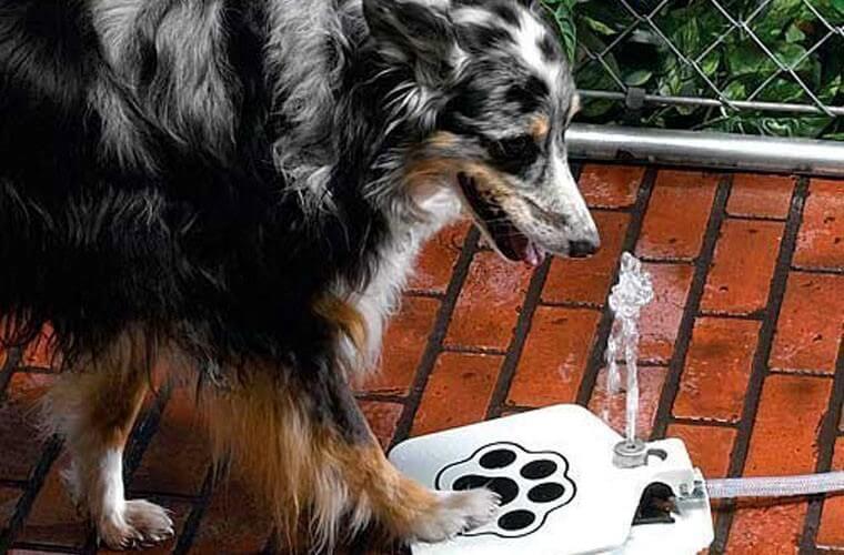 Собака у фонтана живительной воды символизирует пользователя, который разобрался с целевой страницей и заказывает то, что хотел (например, воду с доставкой)