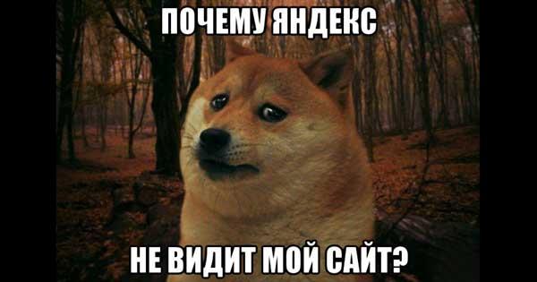 Грустная собака (мем): почему Яндекс не видит мой сайт?
